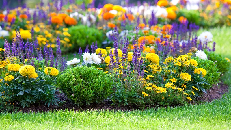 3 Awesome Plants That Naturally Repel Mosquitos in The Villages® Community.