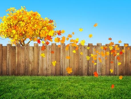 Autumn landscaping in Florida