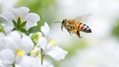 Bee Friendly Landscaping Ideas
