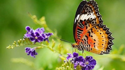 Five plants that bring butterflies to your garden.