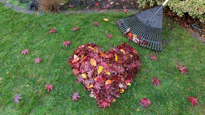 Spruce up your landscaping with colors of Autumn