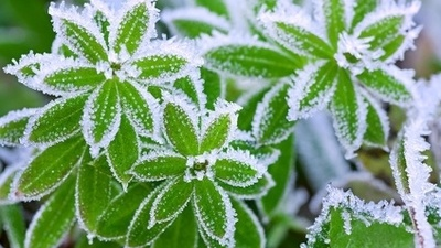 The best way to take care of your landscaping during an overnight freeze