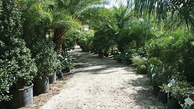 Palms, Trees & Shrubs