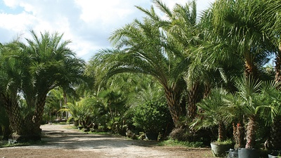 Palms, Trees & Shrubs